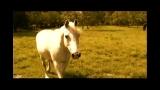 Meekness Horse
