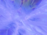 Gelatin Blue
