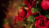 Red Rose Christmas