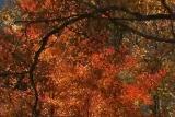 Fall Foliage Longplay, Brown County, IN