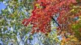 5 Minute Fall Color Loop WIDE