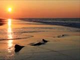 Sun and Surf Loop - SD & HD