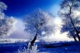 Snowfall and Trees