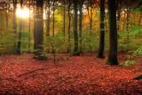 Fall Leaves Long Loop