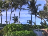 Tropical Background 12