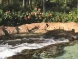 Waterfall Background 6