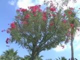 Flower Background 16