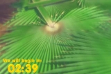 Palm Sunday Countdown