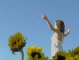 Background: Sunflowers