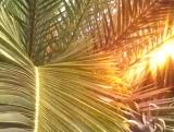 Palm Tree Sunrise Background