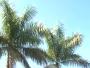 Palm Trees Loop