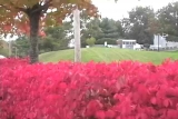 Autumn - Red Bushes with Traffic