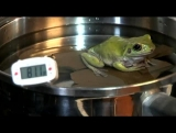 Frog in the Pot