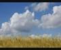 Summer Background 6