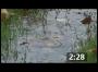 Bloo Countdown: Widescreen#002-SloMo Rain