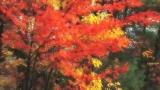 Autumn 30.0