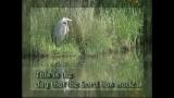 Heron Long Welcome LoopL19-Hymn Music