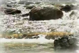 River-Moving Water Background