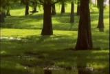 Beautiful Worship Loop Trees and Land