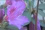 Spring Flowers 004