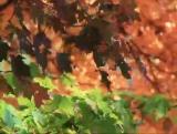 Autumn Breeze SD
