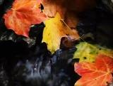 Autumn Brook - SD