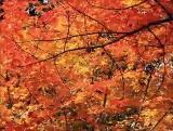 Stunning Autumn Maple Loop - SD