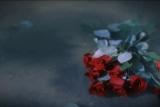 Roses floating in Water