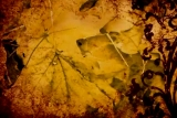 Grunge Fall Motion Background 2