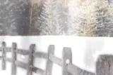 Snowfall in the trees - loop