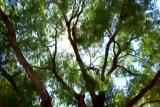 Windy Canopy