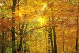 Thanksgiving Fall Harvest Bundle