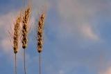 Harvest Trinity