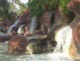 Waterfall Backgrounds Bundle 1