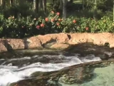 Waterfall Background 6