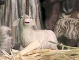 Christmas: Talking Nativity Animals 3