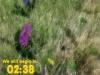 Spring Countdown - Blooming Flowers