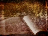 Background: Bible and Field