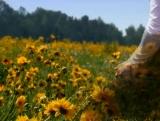 Background: Kneeling in Field of Flowers