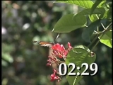 INSECT INVASION COUNTDOWN
