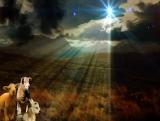 Lambs and Star: Christmas Worship Loop