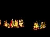 Christmas Tree Lane Package