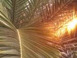 Palm Trees Branches Longplay Loop