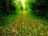 Nature Scenes Longplay Loop