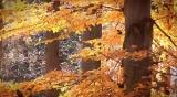 Fall Season 103