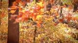 Fall Season 105