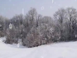 Snow Scenes Loop